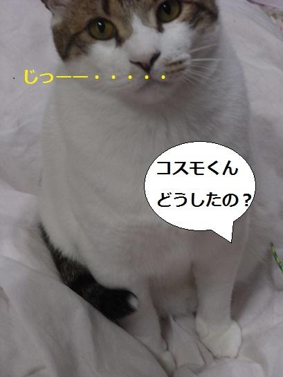 RIMG0768.jpg