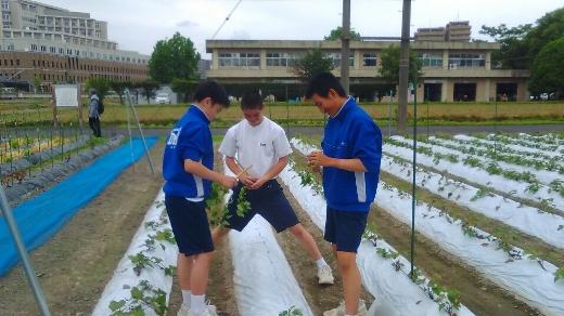 blog290524甲南中 (6)