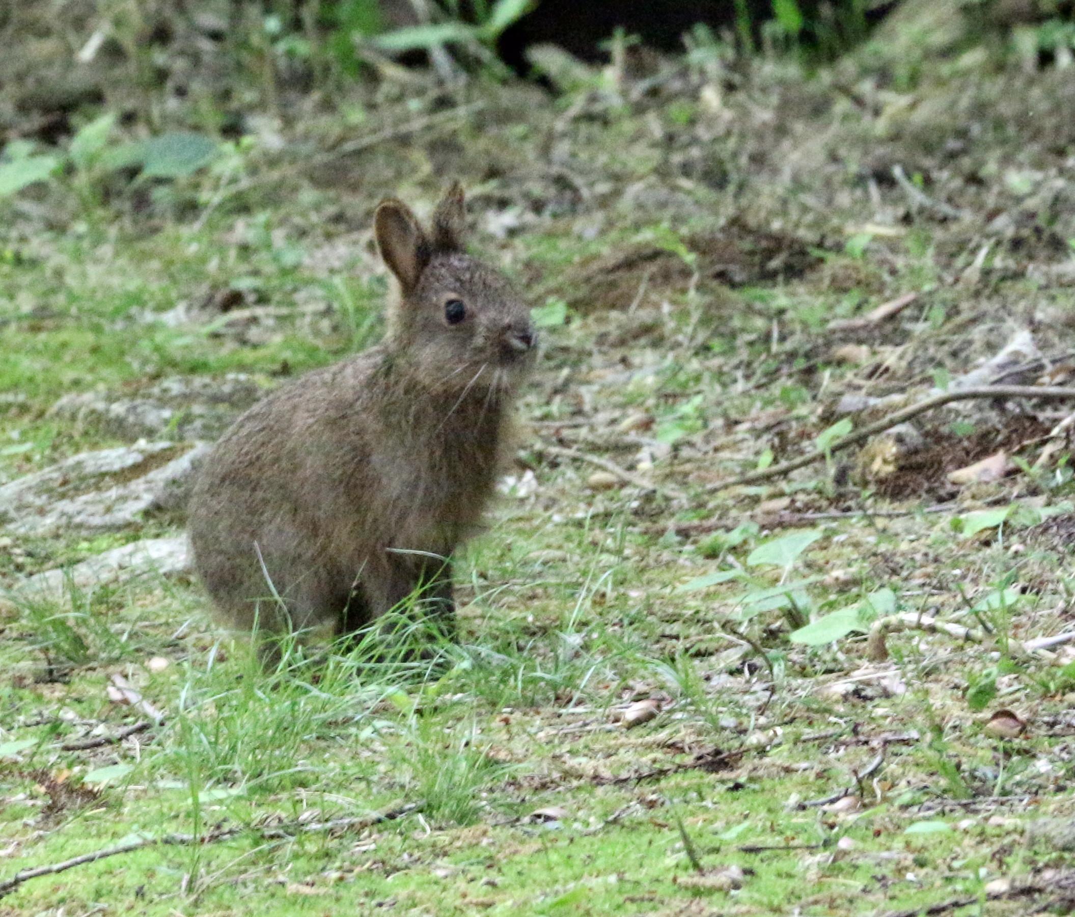 08-04ノウサギ