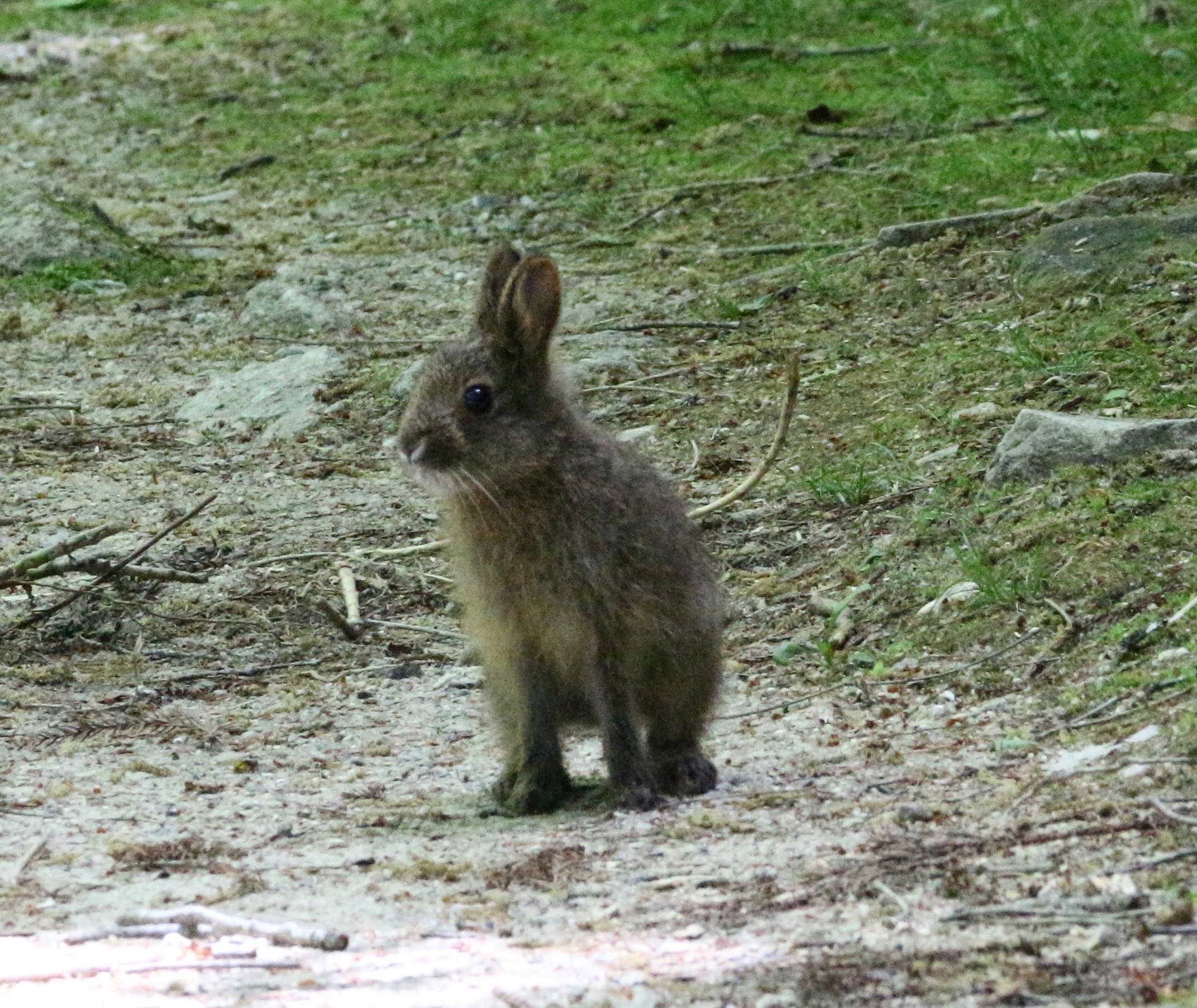 08-05ノウサギ
