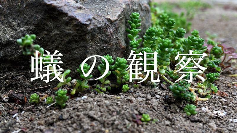 蟻の観察_1_s