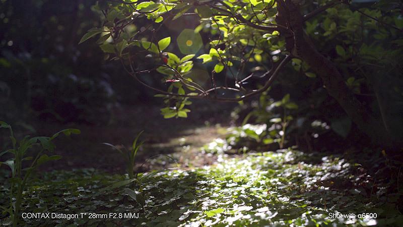 蟻の観察_4_s