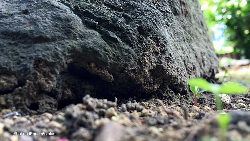 蟻の観察_9_s