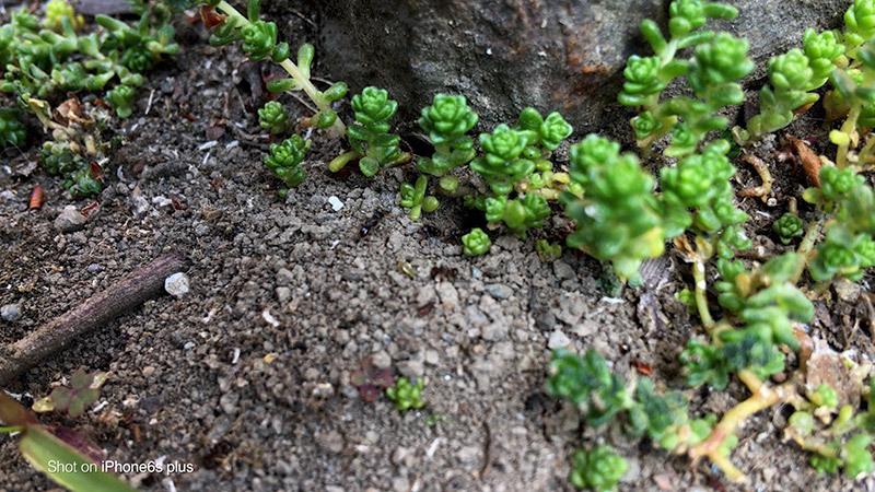 蟻の観察_10_s