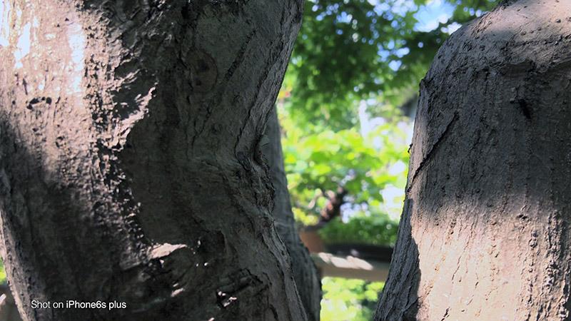 蟻の観察_14_s