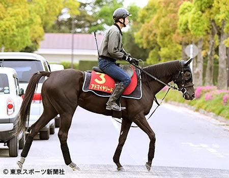 【ヴィクトリアマイル】アドマイヤリードの調教に騎乗したルメール「前回とは馬が違う」