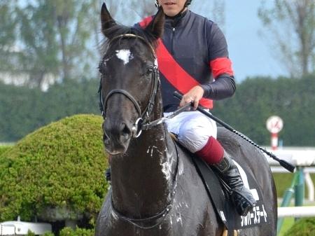 【競馬】最強世代真の最強馬、怪物シルバーステートが5月20日に京都で復帰!絶対に見逃すなよ!