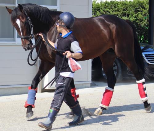 【宝塚記念】でキタサンブラックを倒しそうな馬予想