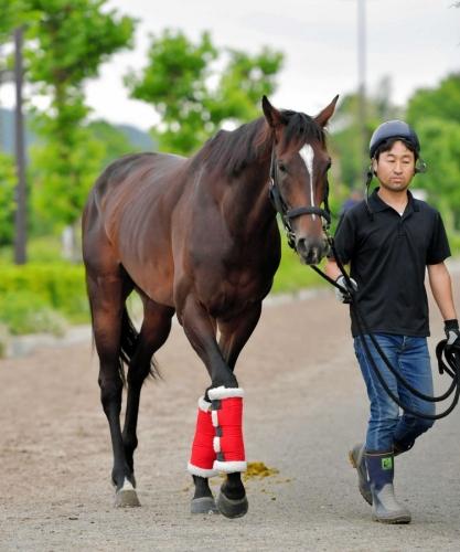 【宝塚記念】キタサンブラックが今年の宝塚記念を勝てない三つの理由