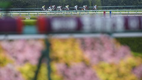 【宝塚記念】近20年で19回目のフルゲート割れ