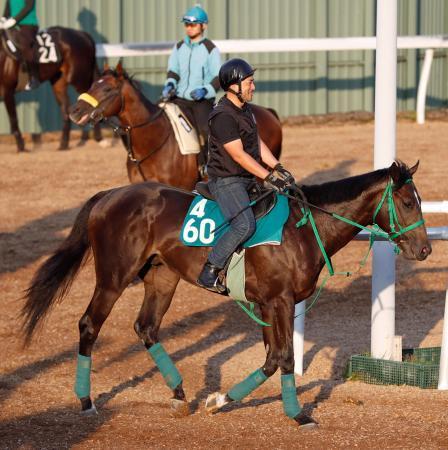 【新馬戦】ウオッカの最高傑作 タニノフランケルさん、デビュー前に既に底を見せてしまう