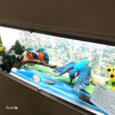 IMG_2307カワセミc