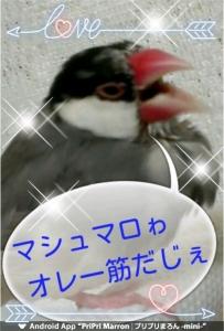 17-04-29-17-20-36-355_deco.jpg