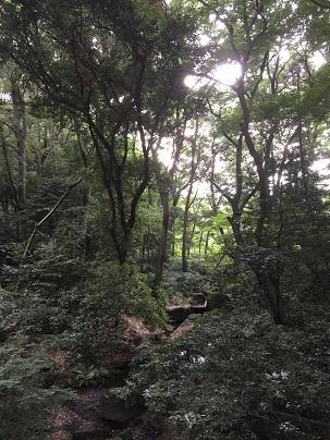 明治神宮20170716 (6)