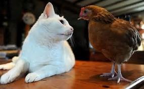 猫とちゃむたま