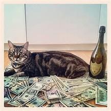 セレブ猫2