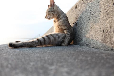 ぼ~っとする猫