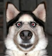 ビックリ犬1