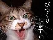 ビックリ猫4