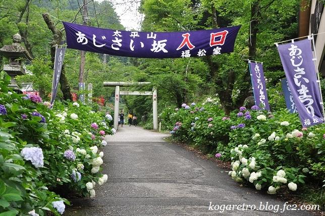 2017太平山のあじさい