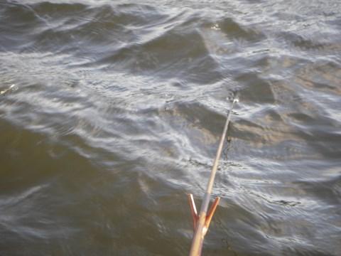 強風で波立つ川面