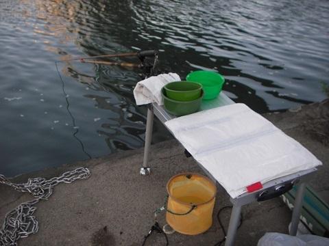 坂川の釣り