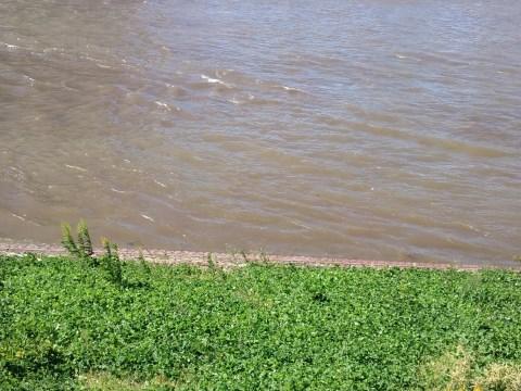 台風後の中川