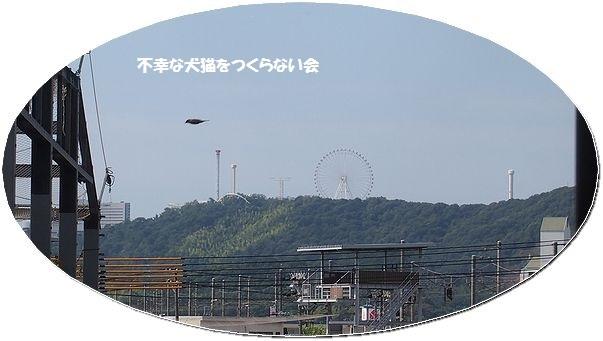 20070827 (6)