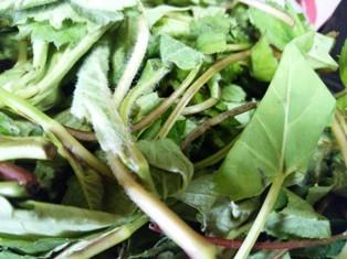 韓、山菜1