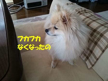 20170502k_3.jpg