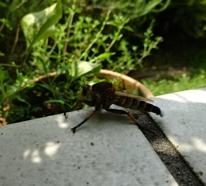 夏のへん虫