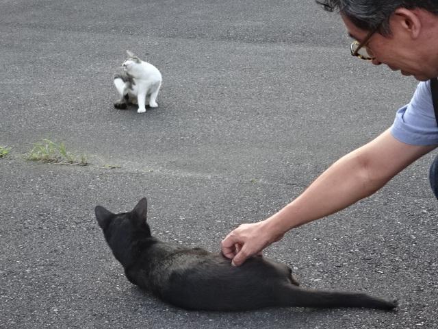 ネコを愛でる
