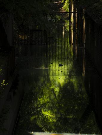玉川上水緑道03