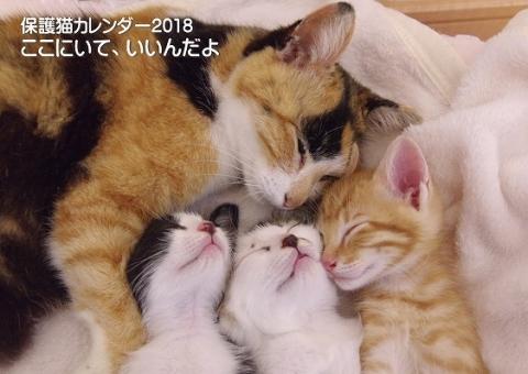 2018年保護猫カレンダー表紙15_201709150055557ce