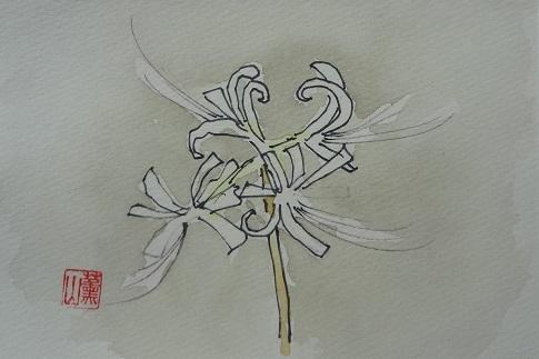 101曼珠沙華絵手紙1