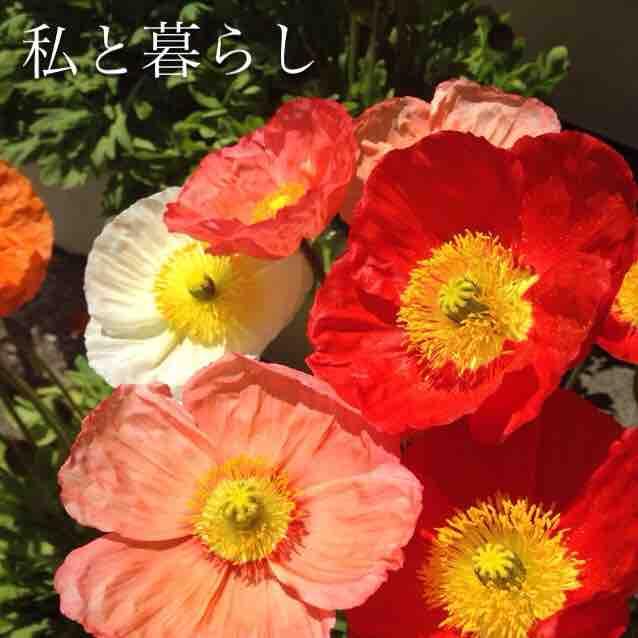fc2blog_20170620165033e07.jpg