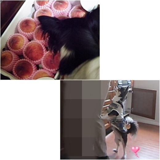 1cats_20170818132556201.jpg