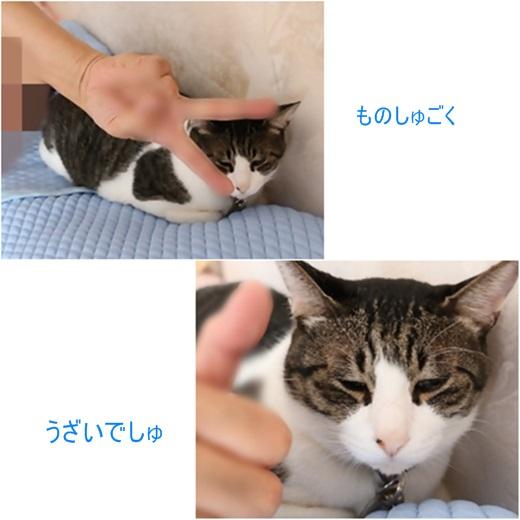 cats1_20170817211845a7f.jpg