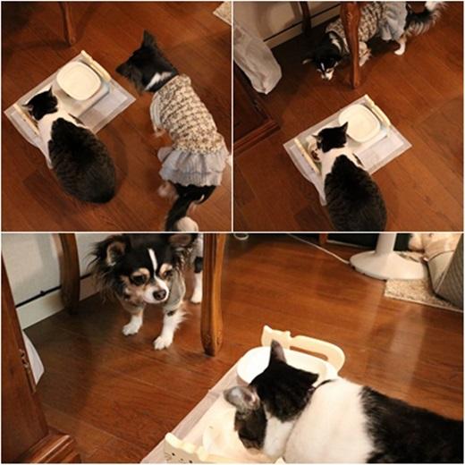 cats_20170612235900dd7.jpg