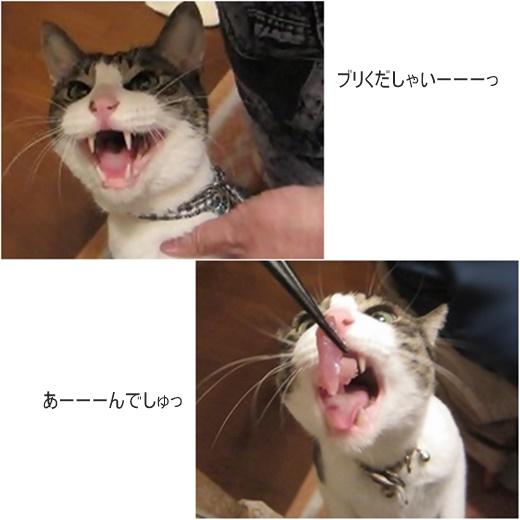 cats_201707201659536bd.jpg