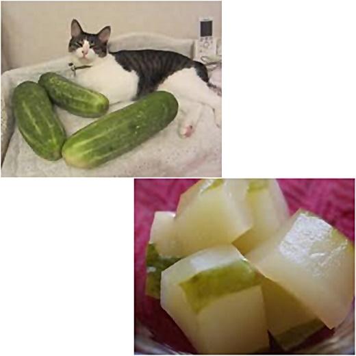 cats_2017091320450602d.jpg