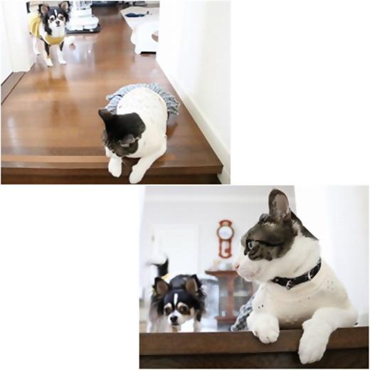 cats_20170918211958dd9.jpg