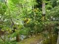 汀の池のほとりの山吹