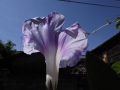 光の中の紫