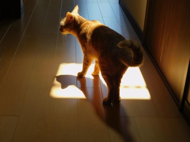 Spotlight4