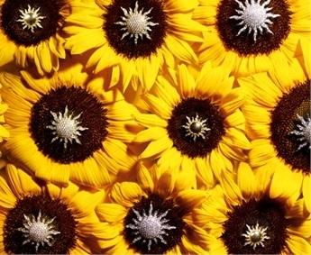 Giovanna-Battaglia-Vogue-Gioiello-30-Thirty-Years-of-Golden-Dreams-4-Inzaghi-e-Dell-Oro-Sunflower-Dashひまわり