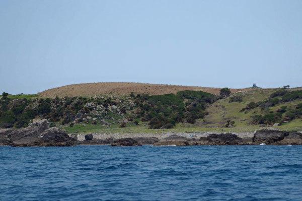 馬毛島―61
