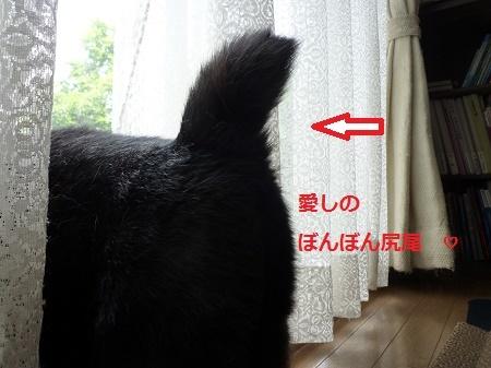 1ぼんぼん尻尾