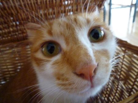 籠猫ぴっち