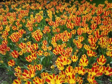 春の花22
